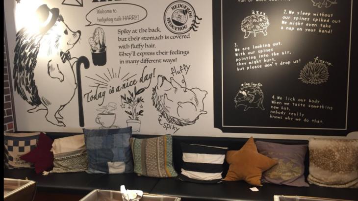 Hedgehog Cafe Harry