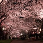 八重洲桜通り